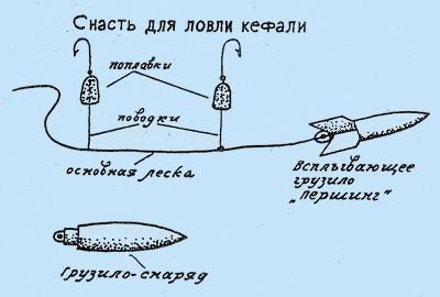 Как ловить кефаль с берега в азовском море